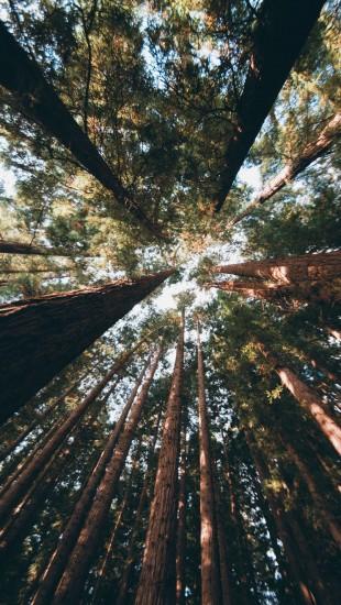 East Warburton Redwood Forest Australia