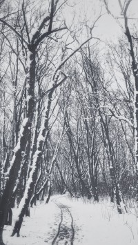 Falling-snow-in-a-winter-park-200x355