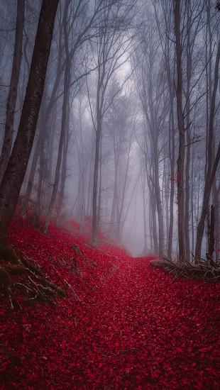 Foggy Misty Autumn Forest