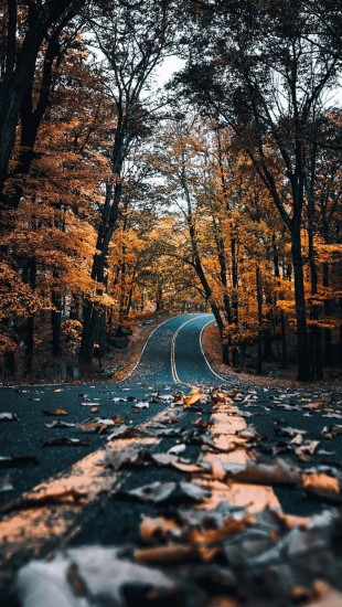 autumn road with leaves