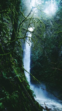 Rainforest-waterfall